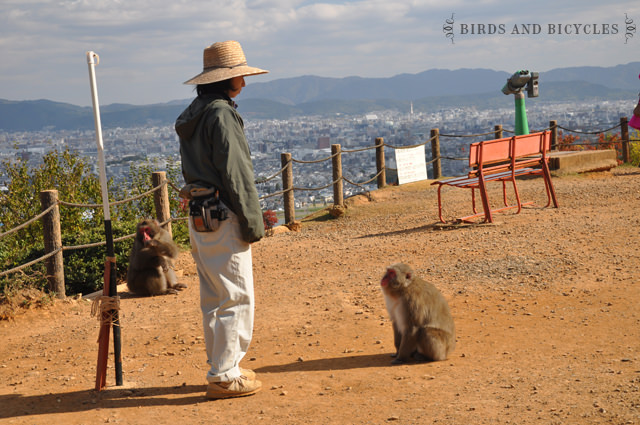 Singes Arashiyama Kyoto