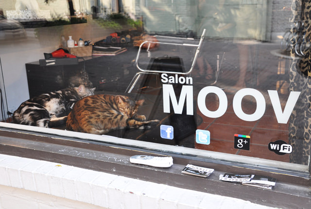 Moov le salon de coiffure chats - Salon de chat francais ...