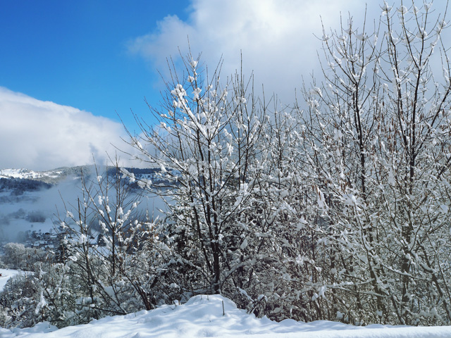 C'est l'hiver en Alsace