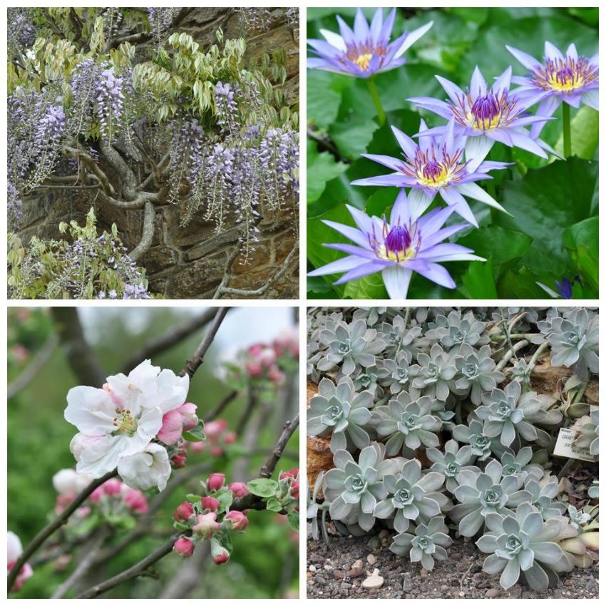 Jardin botanique de Nancy