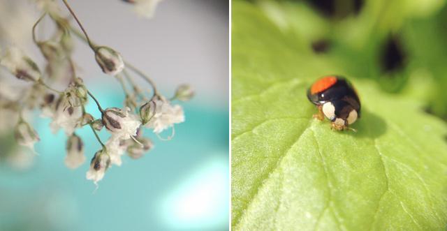 Objectif macro pour smartphone - super pour prendre en photo les fleurs et insectes