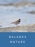 Observation d'animaux, balades nature et randos sur le blog