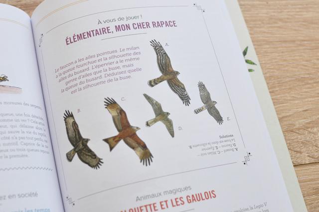 Les rapaces: comment les reconnaître dans le livre