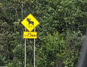 Panneau orignal en Mauricie