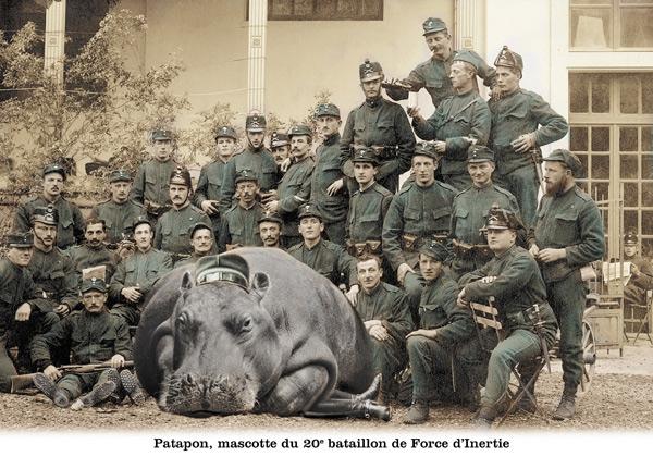 plonk hippo