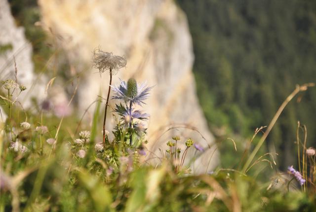 DU haut du Creux du Van au Val de Travers