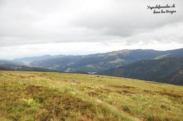 Les landes sur le Kastelberg - balade dans les vosges