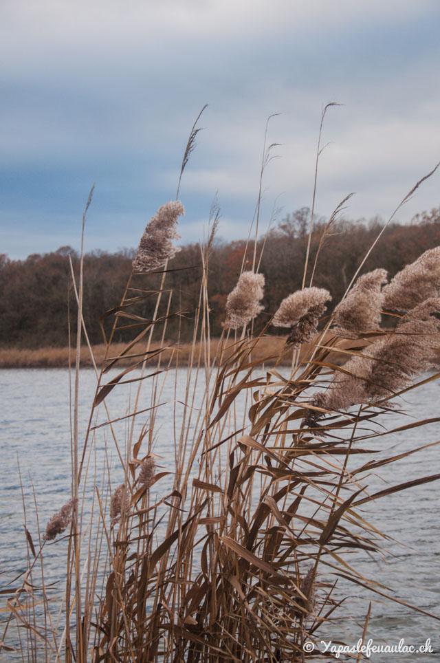 Ornithologie en Lorraine: Où observer des oiseaux d'eau? À l'étang de Lachaussée dans le Parc Naturel Régional, dans la Meuse