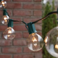 Globe String Lights, Clear G50 Bulbs, Green Wire - Yard Envy