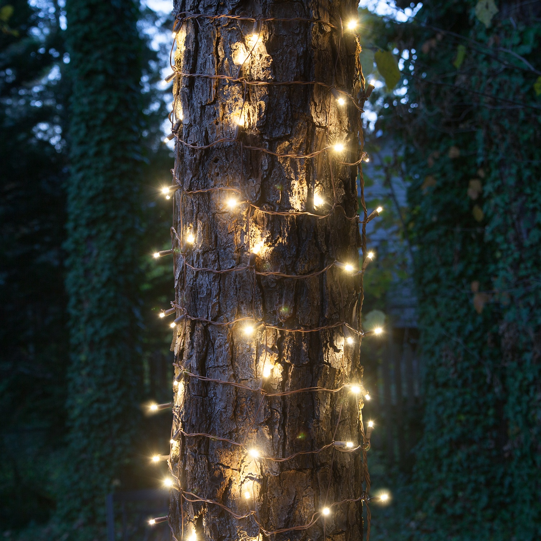 Led Light Bulbs Dollar Tree