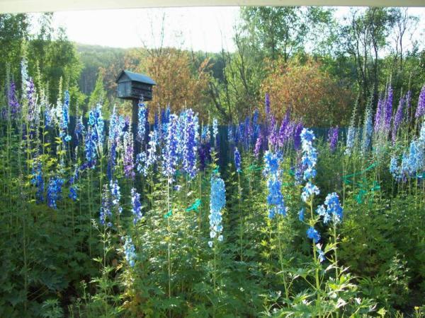 give garden blues yard