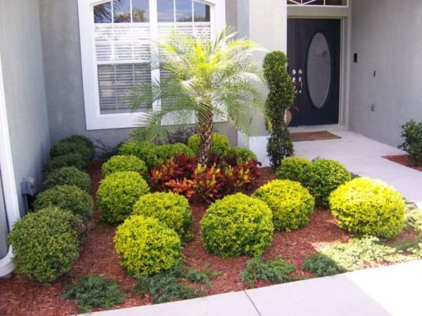 decosee landscaping with palm
