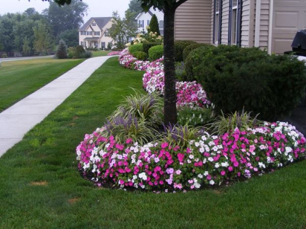 annuals cure spring fever