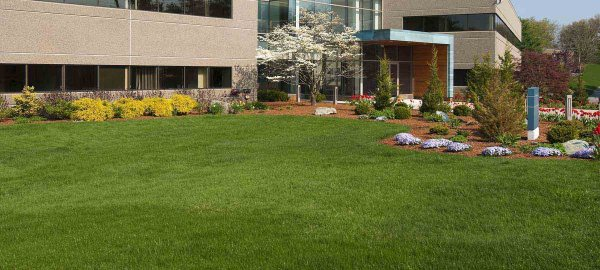 yard works - commercial landscaping