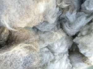 Stacy's Merino cross fleece