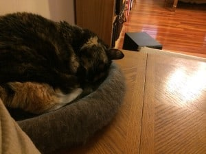 Here she is tonight, sleeping in her Kitty Pi in the living room.