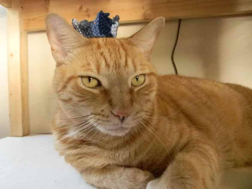 In 2010, I knit a crown in Ravenclaw colors.  Since Tiger believes himself to be king of the house, I thought him an appropriate model.  I love the look of disdain on his face.