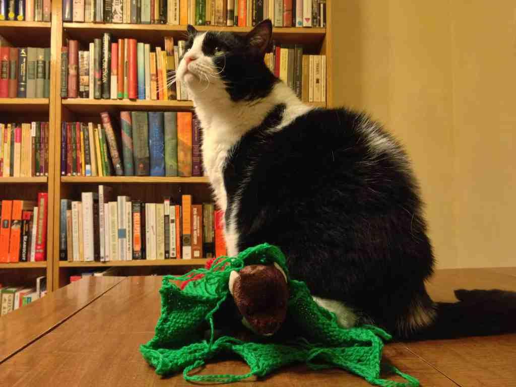 Cats often interrupt my photo shoots!
