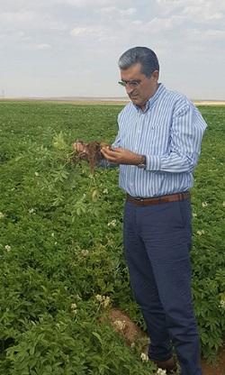 TBMM Tarım, Orman ve Köyişleri Komisyonu Başkanı Recep Konuk, deneme ekimi yapılan tarlalarda incelemelerde bulundu.
