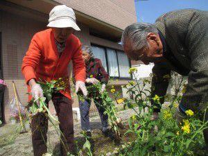 20150413利用者様とご一緒に、庭にお花を植えました!2