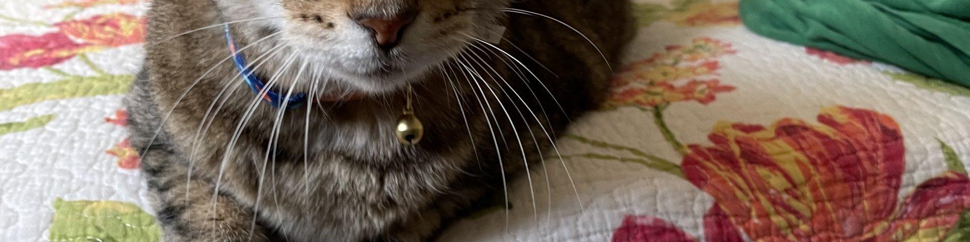 Archie The Cat