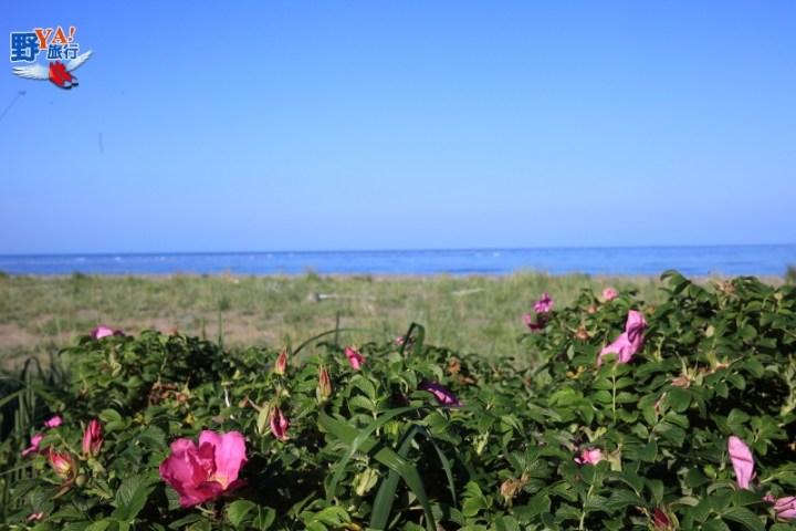 東北海道最後秘境-夏日的野付半島 @YA !野旅行-吃喝玩樂全都錄