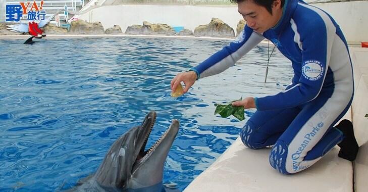 海豚也愛吃粽子,度端午 @YA !野旅行-玩樂全世界