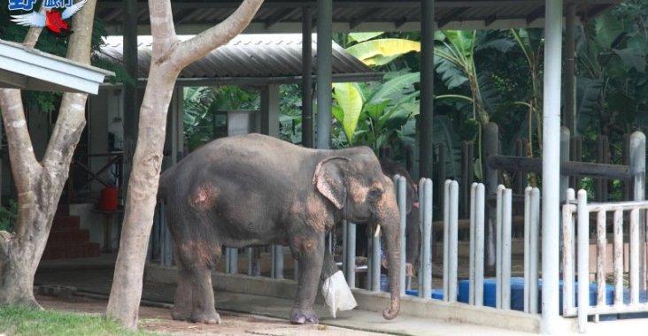 泰國唯一的大象養老院 @YA !野旅行-玩樂全世界