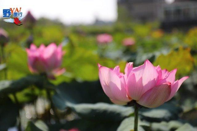 粉紅景觀橋點亮浪漫氛圍,今年七夕最佳約會景點 @YA !野旅行-吃喝玩樂全都錄