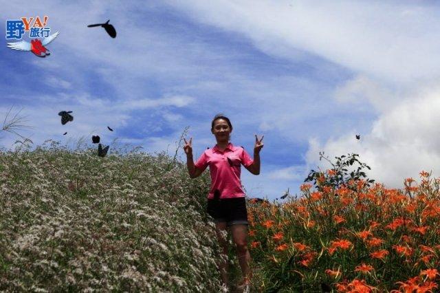 東台灣三大金針花海懶人包 @YA !野旅行-吃喝玩樂全都錄