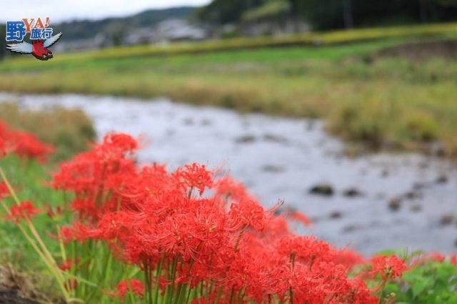 日本鄉下農泊體驗 不懂日文嘛ㄟ通 @YA !野旅行-玩樂全世界