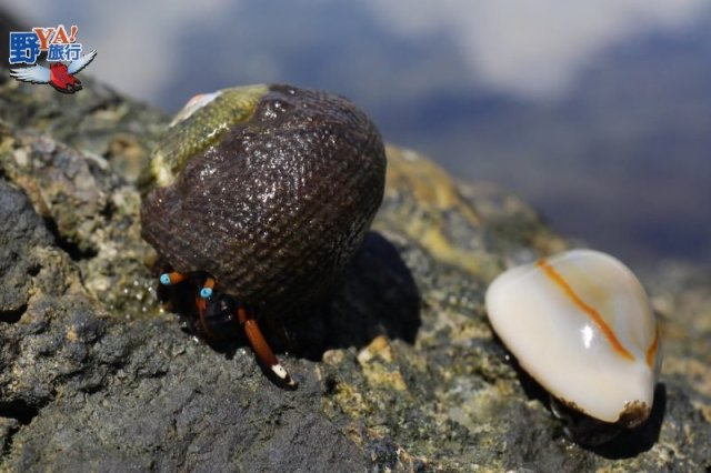 東海岸蔚藍海灣,隱藏版海水生態池 @YA !野旅行-吃喝玩樂全都錄