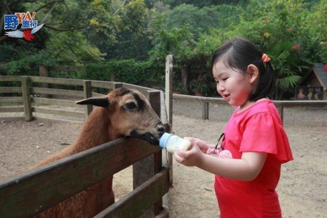 牛不會飛的飛牛牧場 海線親子歡樂天堂 @YA !野旅行-玩樂全世界