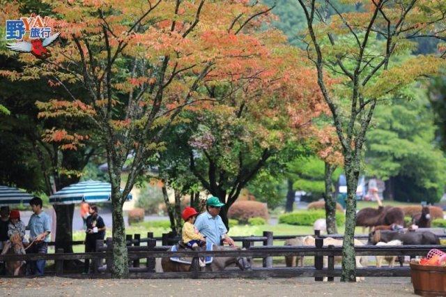 九州最佳親子旅遊景點-九州自然動物園 @YA !野旅行-吃喝玩樂全都錄
