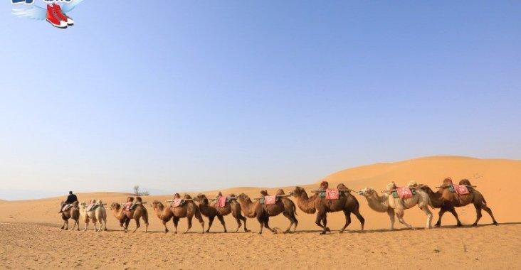 逛西部影城電影場景追星 騰格里騎駱駝感受大漠風光 @YA !野旅行-玩樂全世界