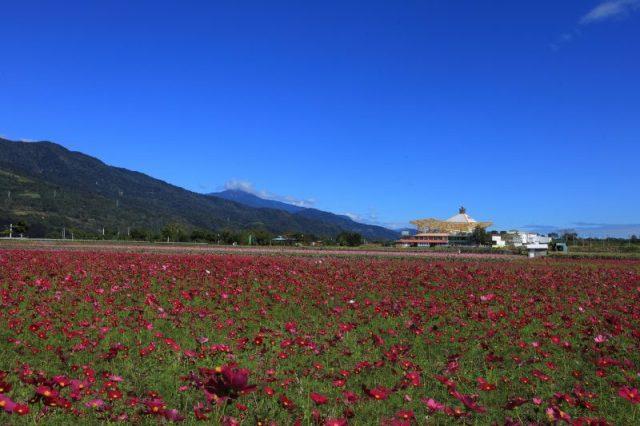 花東縱谷油菜花海 元旦假期最美風景 @YA !野旅行-吃喝玩樂全都錄