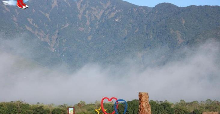 大農大富平地森林花海迎賓,新春納福旺旺來! @YA !野旅行-玩樂全世界