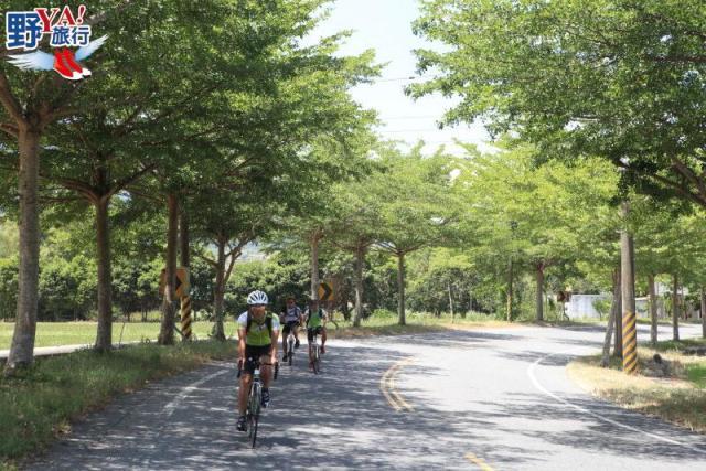 花蓮最浪漫的景觀公路 夏日193線黃綠紅繽紛登場 @YA !野旅行-吃喝玩樂全都錄