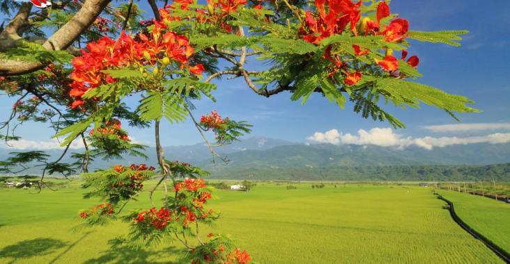 花蓮最浪漫的景觀公路 夏日193線黃綠紅繽紛登場 @YA 野旅行-陪伴您遨遊四海