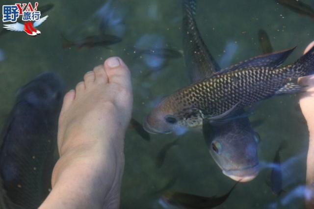 Siquijor熱帶叢林跳水 神秘的巫師島愛情藥水 @YA !野旅行-玩樂全世界