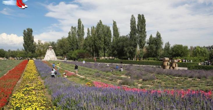 新疆|伊犁 世界薰衣草三大產地之一 新疆伊犁紫色浪漫風情 @YA !野旅行-玩樂全世界