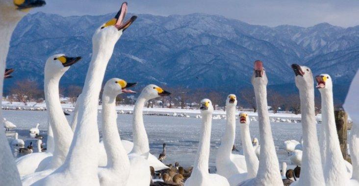日本|新潟 越後雪國魅力無限 冬日必玩行程看這裡 @YA !野旅行-玩樂全世界