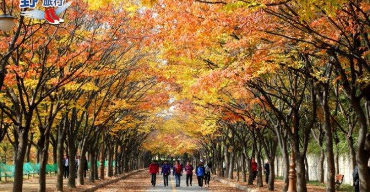 韓國楓紅預測出爐 計畫到韓國賞楓趁現在 @YA 野旅行-陪伴您遨遊四海