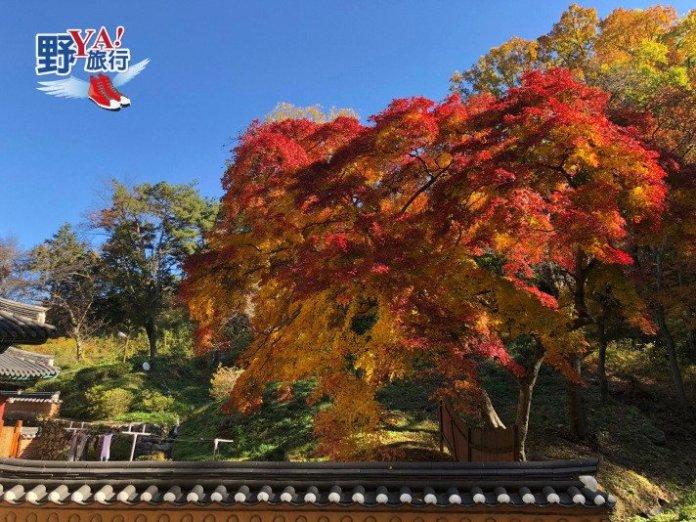 韓國楓紅預測出爐 計畫到韓國賞楓趁現在 @YA !野旅行-吃喝玩樂全都錄