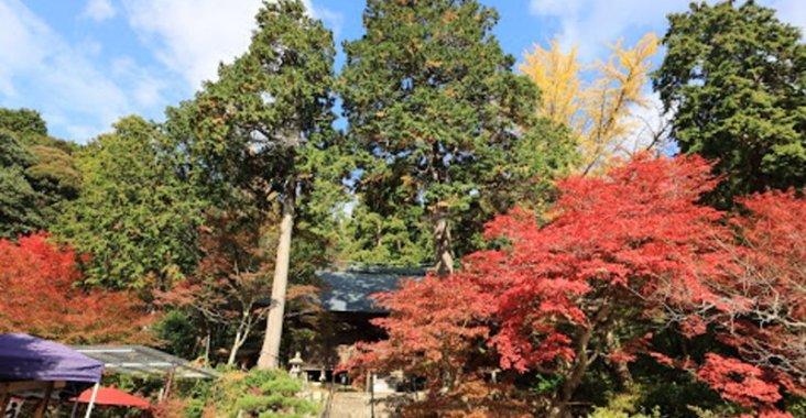 浪漫的季節唯美的情境,丹波篠山楓紅片片 @YA !野旅行-玩樂全世界