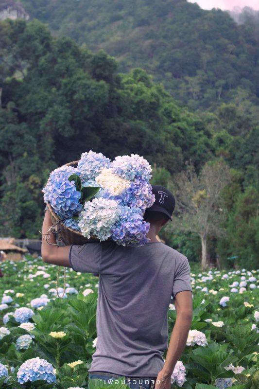 泰國清邁百花盛開 三座美麗花園農場競相爭豔 @YA !野旅行-吃喝玩樂全都錄