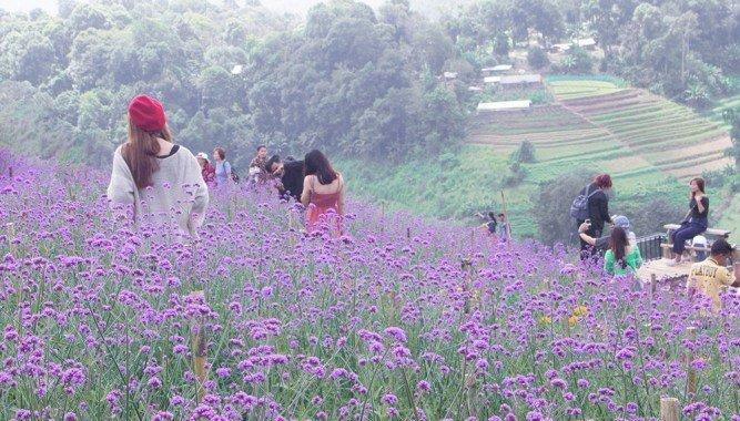 泰國清邁百花盛開 三座美麗花園農場競相爭豔 @YA !野旅行-玩樂全世界