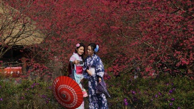 預約2020浪漫春櫻 九族文化村歡樂無限大 @YA !野旅行-玩樂全世界