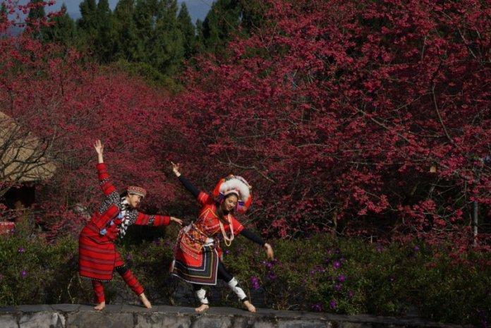 台灣賞櫻首選 九族櫻花祭春節過後登場 @YA !野旅行-吃喝玩樂全都錄