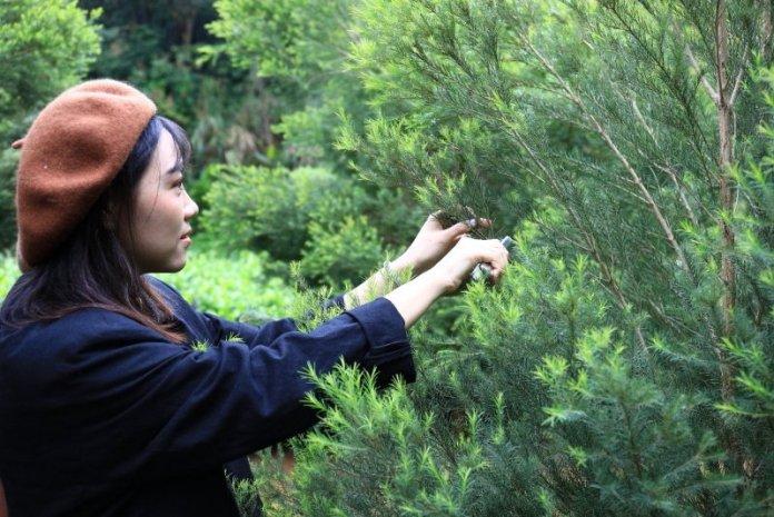 悠遊坑子溪品茶玩體驗 宛如綠寶石的秘境後花園 @YA !野旅行-吃喝玩樂全都錄